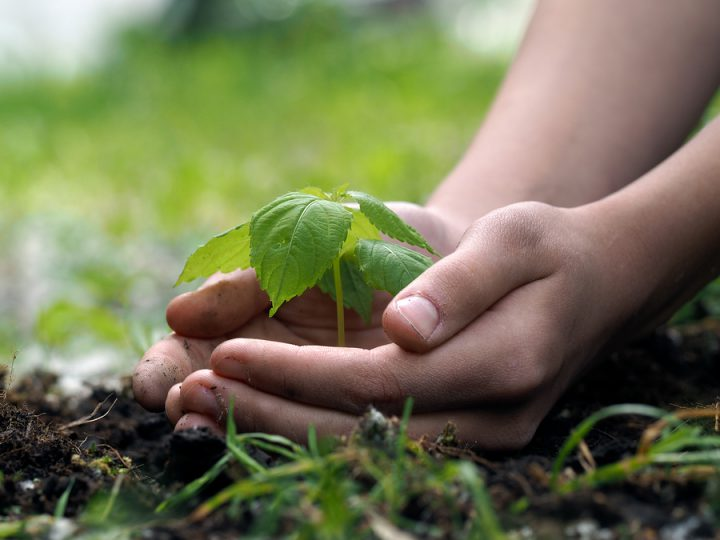 ecology, environmental protection as related to crowdfunding.